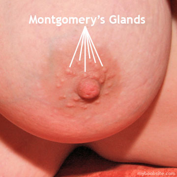 Big Breast Close Up detailing Areola, Montgomerys Glands & Nipple